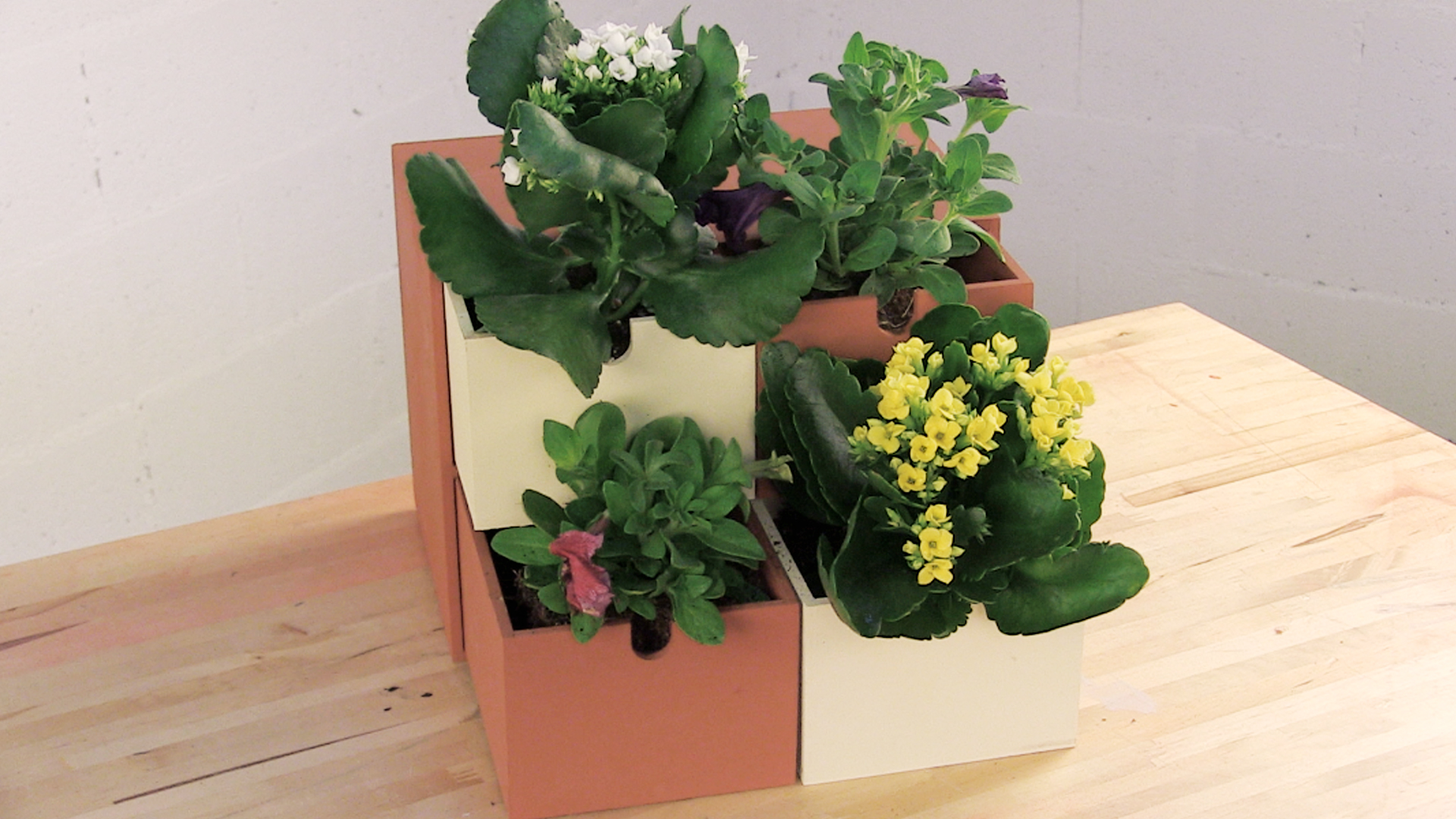 Idea Para Colocar Plantas Dentro De Casa Rubi Do It